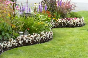 coiled edging separating lawn and garden